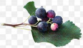 Blueberry Fruit - Juice Blueberry Grape Clip Art PNG
