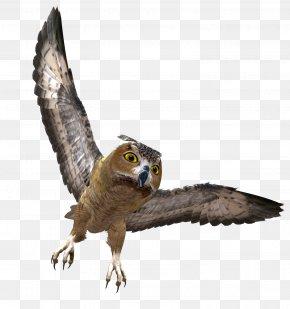 Owl - Owl Bird Clip Art Image PNG