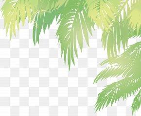 Vector Palm Leaves - Arecaceae Leaf Euclidean Vector Coconut PNG
