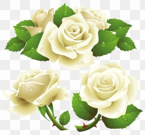 White Rose Image, Flower White Rose Picture - The White Rose White Rose Of York Clip Art PNG