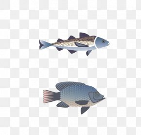 Fish - Fish ISO 216 Clip Art PNG