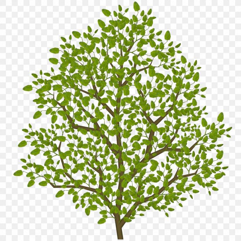 Twig Leaf Shrub Tree Plant Stem, PNG, 1024x1024px, Twig, Branch, Grass, Leaf, Plant Download Free