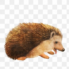 Cute Cartoon Hedgehog - Amur Hedgehog Animal PNG