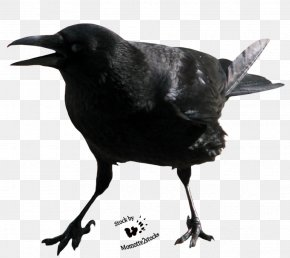 Crow Free Image - Crows Clip Art PNG