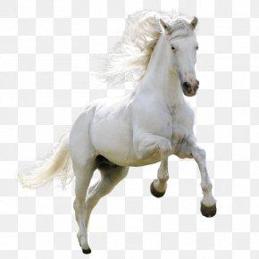 Horse - Horse Download Clip Art PNG