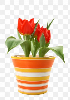 A Pot Of Red Tulips - Flower Tulip Bulb Saucer Bedding PNG