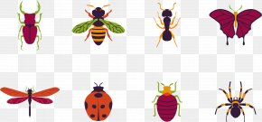 Mosquito Killing Insect - Butterfly Beetle Mosquito PNG