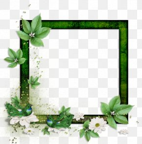 Picture Frames Paper Photography PNG