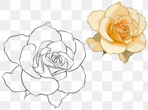 Hand Drawn Rose - Beach Rose Rosa Chinensis Watercolor Painting Illustration PNG