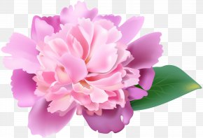 Pink Peony Clip Art Image - Peony Flower Image Resolution Clip Art PNG