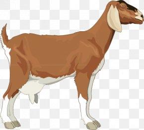 Goat Pictures For Children - Boer Goat Sheep Clip Art PNG