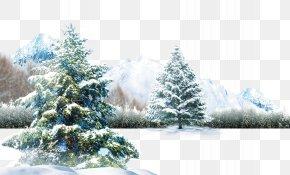 Winter Scene - Polar Bear Winter Light Wallpaper PNG