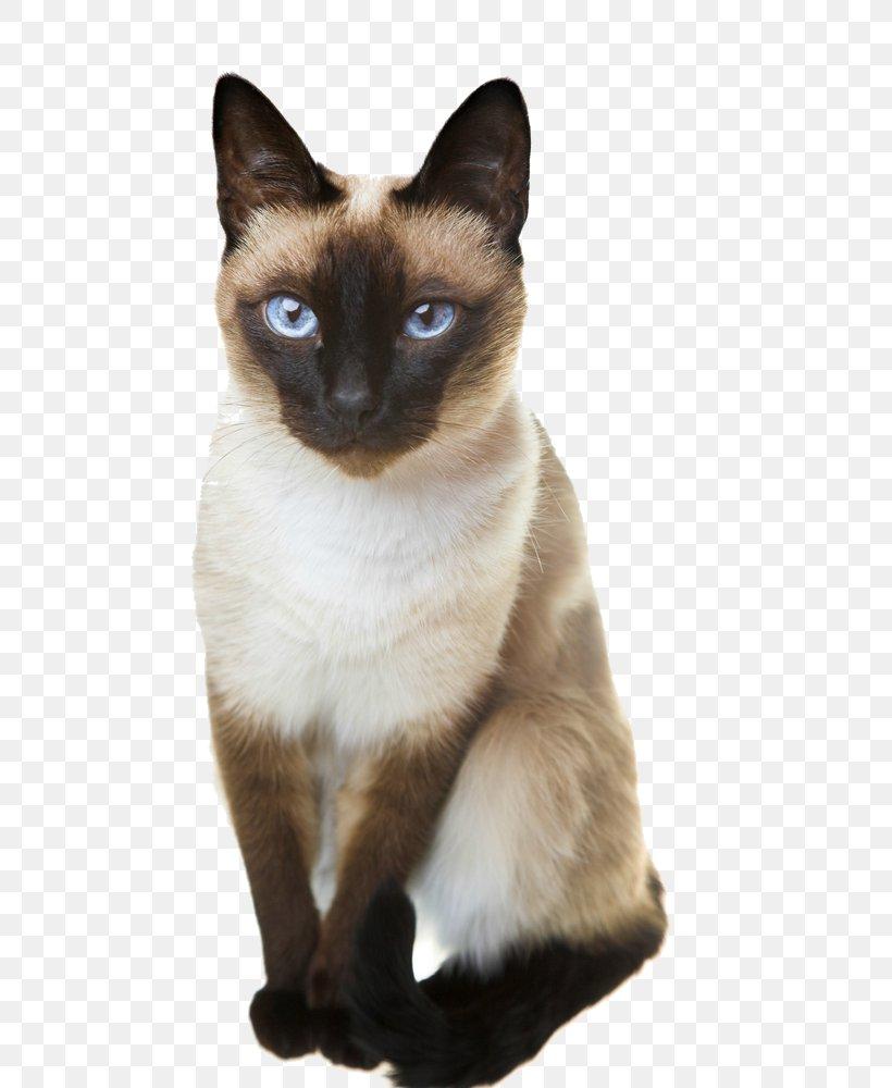 Siamese Cat Thai Cat Balinese Cat Oriental Shorthair Persian