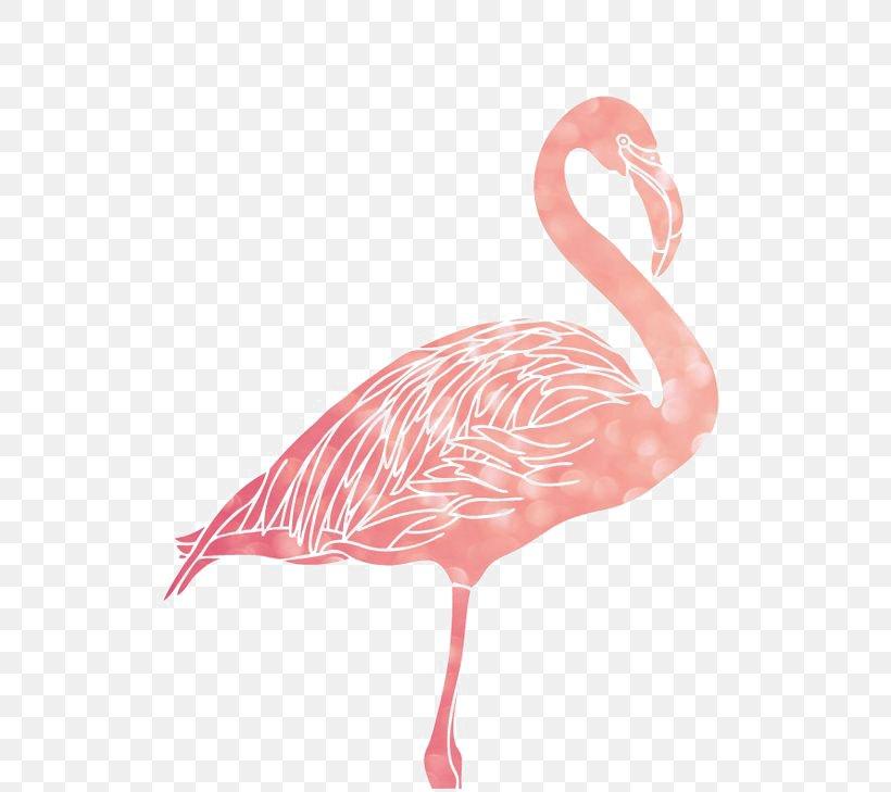 Flamingo 1080p Wallpaper Png 564x729px Flamingo Beak Bird