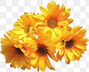 Clip Art Image Transparency Pot Marigold PNG