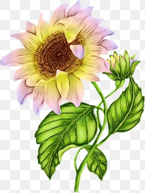 Morning Day Clip Art Image Drawing PNG