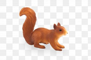 A Squirrel - Eastern Gray Squirrel Raccoon Red Squirrel Skunk PNG