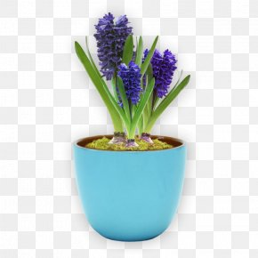 Flower Pot - Flowerpot Grape Hyacinth Ceramic Blume Plant PNG