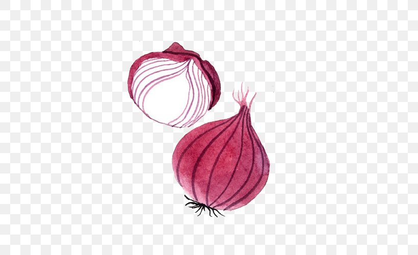 Yellow Onion Watercolor Painting Drawing, PNG, 500x500px, Onion, Drawing, Food, Magenta, Petal Download Free