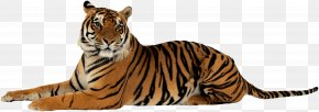 Tiger Image Download Tigers - Jim Corbett National Park Lion Sumatran Tiger Project Tiger Felidae PNG
