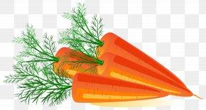 Carrot Image - Carrot Orange Flower Tree PNG