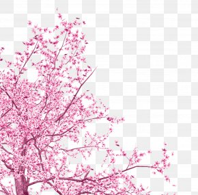 Pink Flowers - National Cherry Blossom Festival Tree PNG