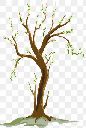 Cartoon Tree - Tree Spring Clip Art PNG