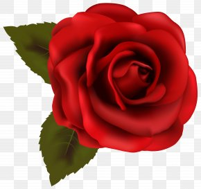 Beautiful Red Rose Transparent Clip Art Image - Rose Red Clip Art PNG