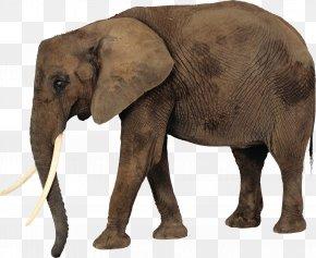 Elephant - African Elephant Clip Art PNG