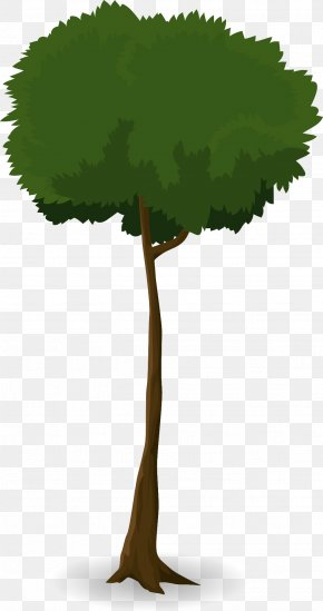 Tree Branch - Tree Leaf Trunk Canopy Plant PNG