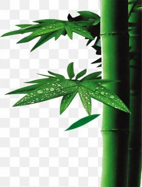 Bamboo - U7af9u9162u6db2 Bamboo Textile Acetic Acid Bamboo Charcoal PNG