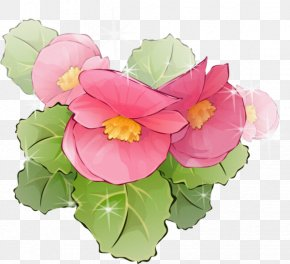 Hand-painted Lotus - Picture Frame Flowerpot Floral Design Clip Art PNG