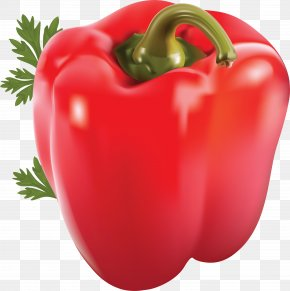 Pepper Image - Chili Pepper Bell Pepper Capsicum Vegetable Spice PNG