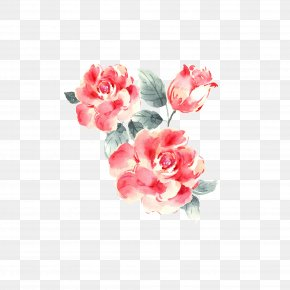Plant Flowers - Garden Roses Drawing PNG