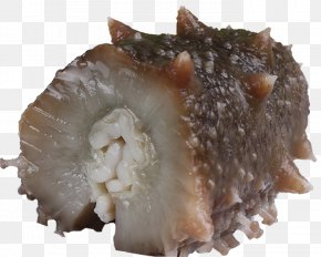 Food Cucumber - Sea Cucumber As Food Seafood Delicatessen PNG