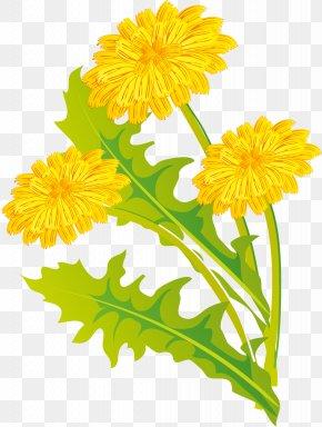 Dandelion - Dandelion Calendula Officinalis Cut Flowers Plant PNG