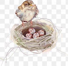 Vector Bird Nest - Edible Birds Nest Swallow PNG