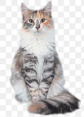 Kitten - Siberian Cat Norwegian Forest Cat Maine Coon Kitten Siamese Cat PNG