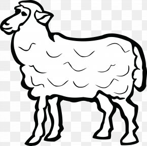 Coloring Book Cowgoat Family - White Sheep Sheep Line Art Livestock PNG