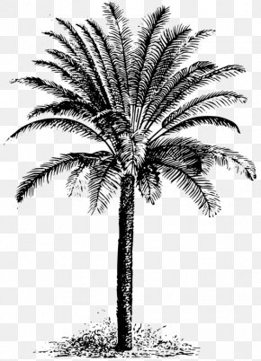 Palm Tree Drawing key - Clip Art Palm Trees Vector Graphics Illustration PNG
