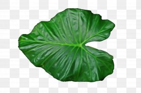 Annual Plant Flower - Leaf Green Plant Flower Annual Plant PNG