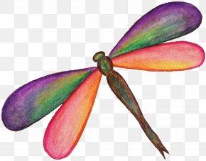 Dragonfly - Display Resolution Desktop Wallpaper Twilight Sparkle PNG