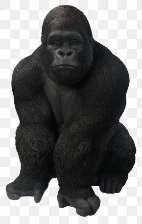 Gorilla - Gorilla Ape Goat Primate PNG