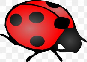 Cartoon Ladybug Clip Art - Beetle Ladybird Clip Art PNG