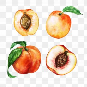 Hand-painted Peach - Peach Watercolor Painting Apricot Clip Art PNG