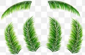 Palm Leaves - Palm Branch Leaf Arecaceae Clip Art PNG