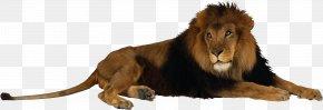 Lion Png Image - Fort Wayne Children's Zoo Lion Sumatran Tiger Giraffe PNG