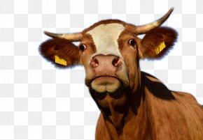 A Cow Creative - Texas Longhorn Cow Aurochs Dairy Cattle Slaughterhouse PNG