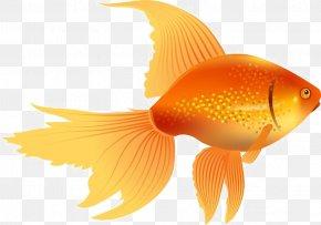 Goldfish Transparent - Clip Art Vector Graphics Black Telescope Illustration PNG