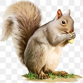 Fawn Fox Squirrel - Watercolor Animal PNG